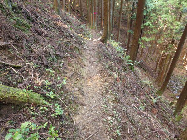526d990788 ポカポカ陽気になってきました。日差しが照らす山腹を進みます。 途中、登山道 ...