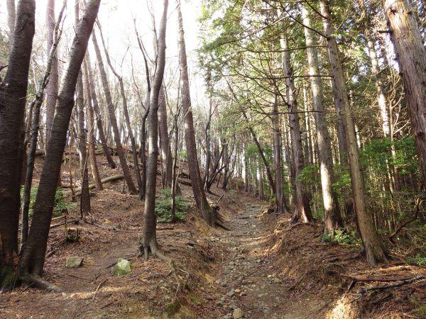 32bdf3a636 経ヶ峰への登山ルートは下調べした感じだと、どれも歩きやすい登山道だと聞いていたけど、本当に広くてわかりやすい登山道ですね~!